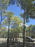 Av. Diagonal