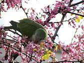 Wiosenna papuga