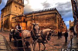 Coche de caballos en La Mezquita.