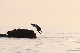 da dolphin