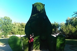 Orso Verde