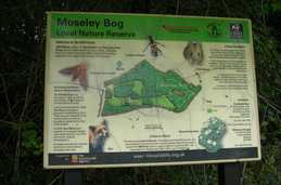 Nature Reserve - Moseley