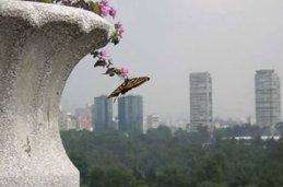 Vista de la ciudad desde la Basílica de La Virgen de Guadalupe
