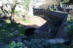 the bear has walking and searching a place with shadow