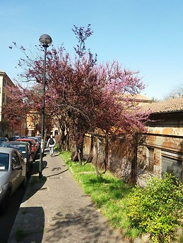 Beautiful Bologna in Spring_01