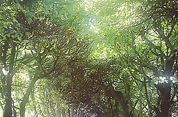 Beautiful tree tunel in Oliwa Park