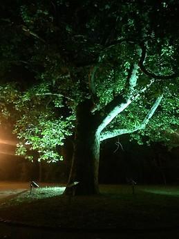 Cismigiu by night