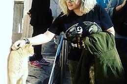 gato del acropolis