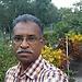 Vipin  Prasad