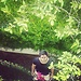 Hossam Anany