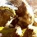 Balu in Fontainebleau