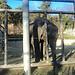 Zoo de Tbilisi