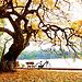 The most romantic city in NorhVietnam