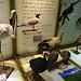 Un museo de flora y fauna en Lima