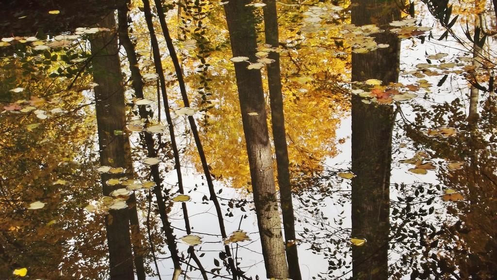 121112-fifty-shades-autumn-parc-la-tete-
