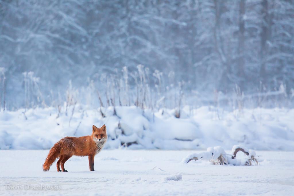 Bildergebnis für Lettland im Winter