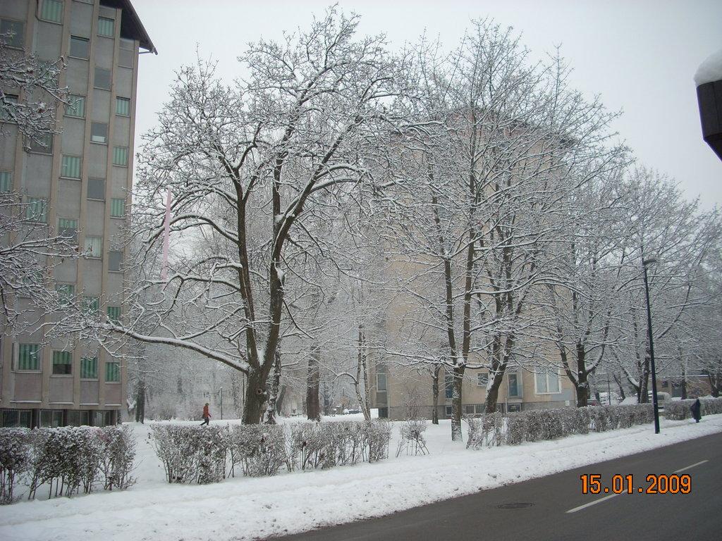 Nieve en Rozna Dolina