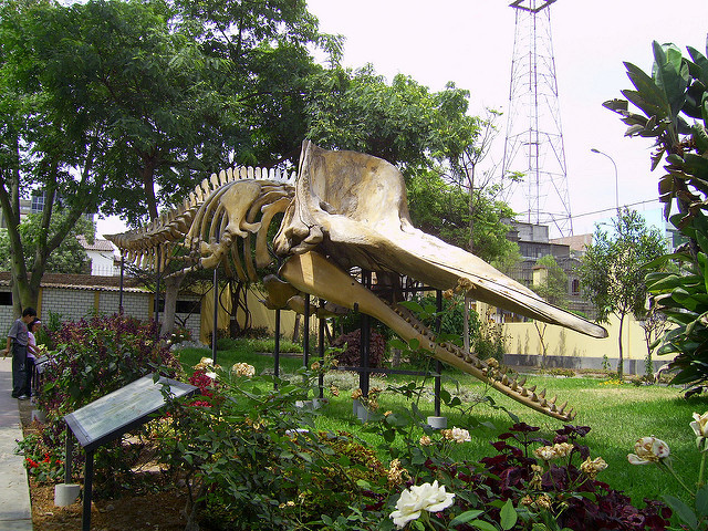 A museum with the flora and fauna of Lima