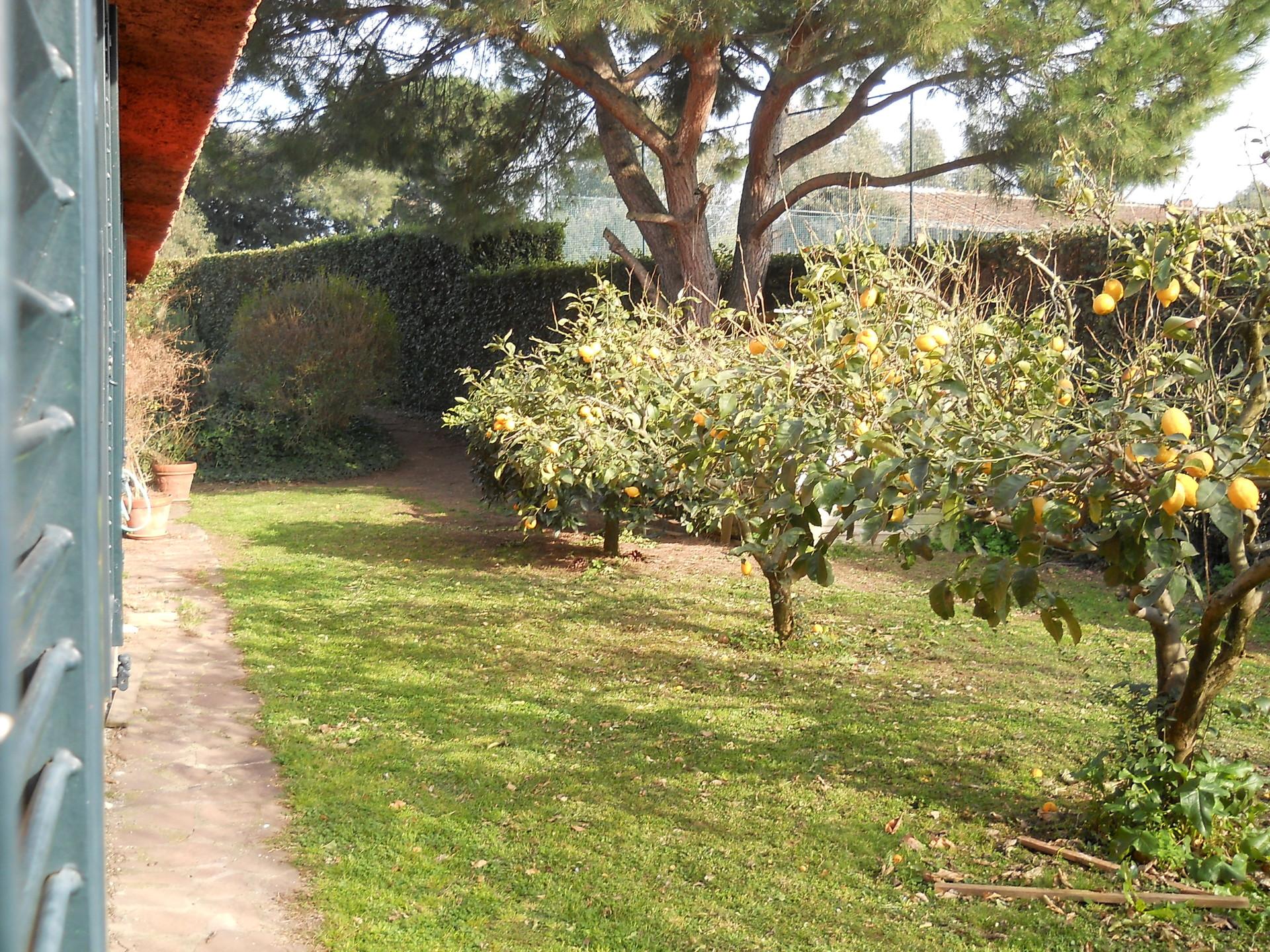 affitto camera spaziosa con bagno e giardino zona laurentina