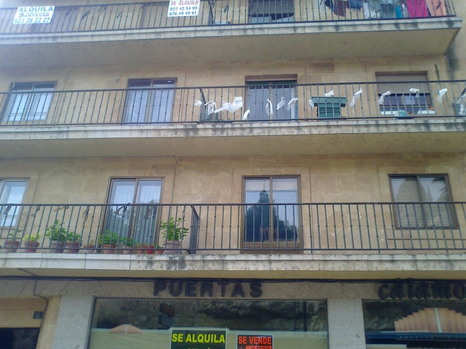 Alquilo piso en salamanca paseo rector esperabe 6 for Alquiler de pisos en salamanca