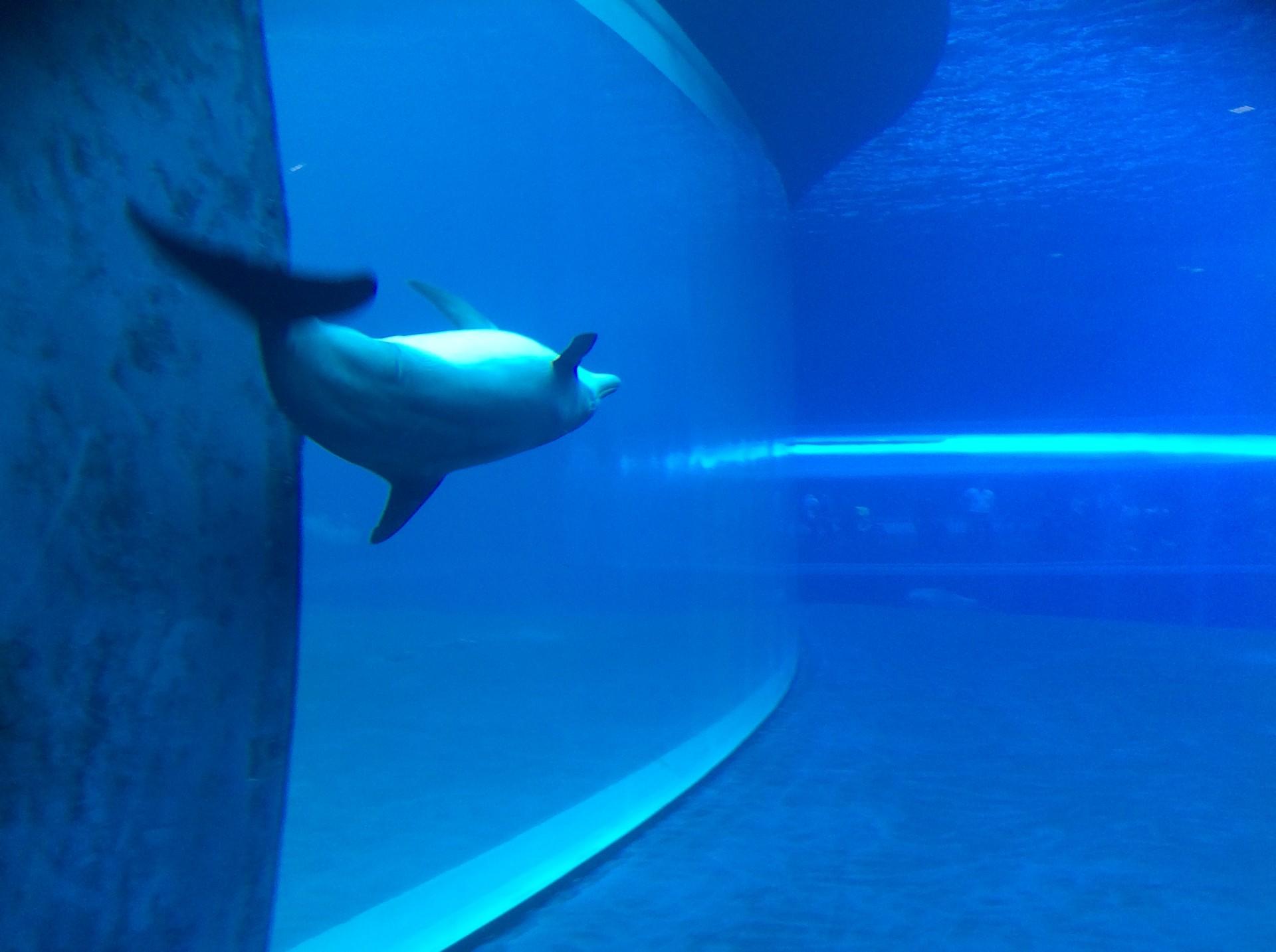 aquarium-genoa-italy-85deef8d2bd6256786d
