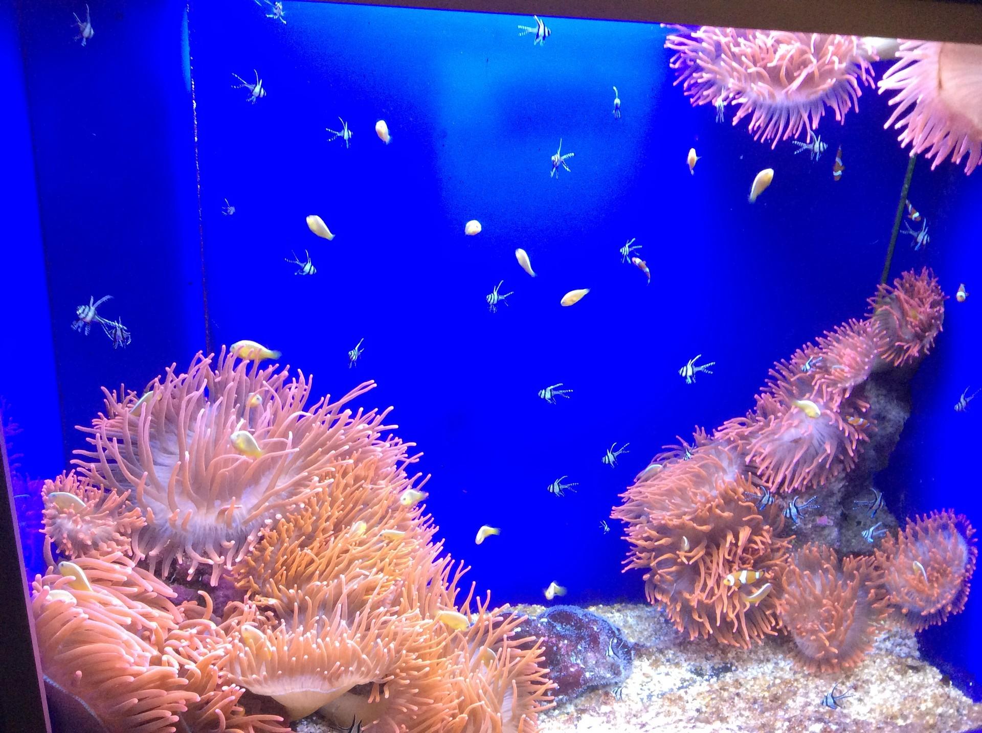 aquarium-genoa-italy-93f07951857722dbde9