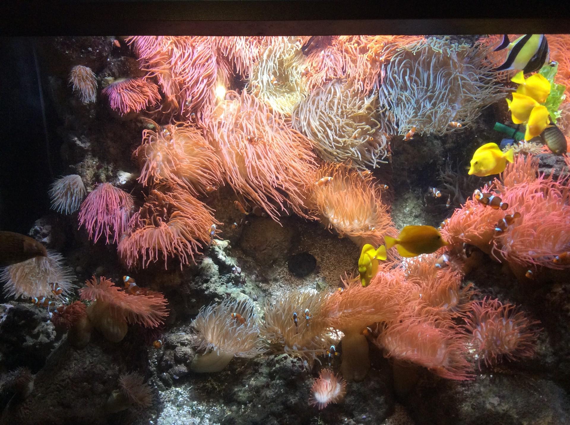 aquarium-genoa-italy-a3b087805c304c63251