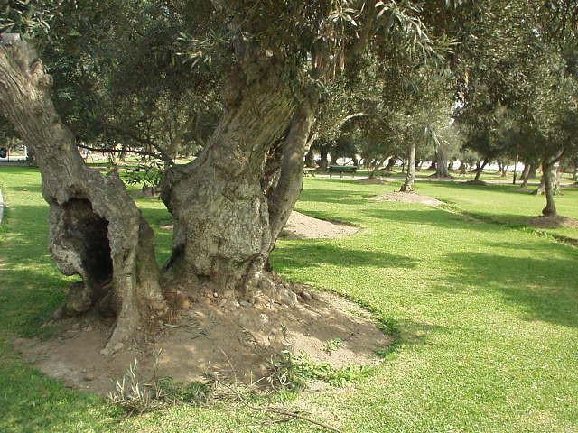 arboles-mas-400-anos-historia-c4493e904a