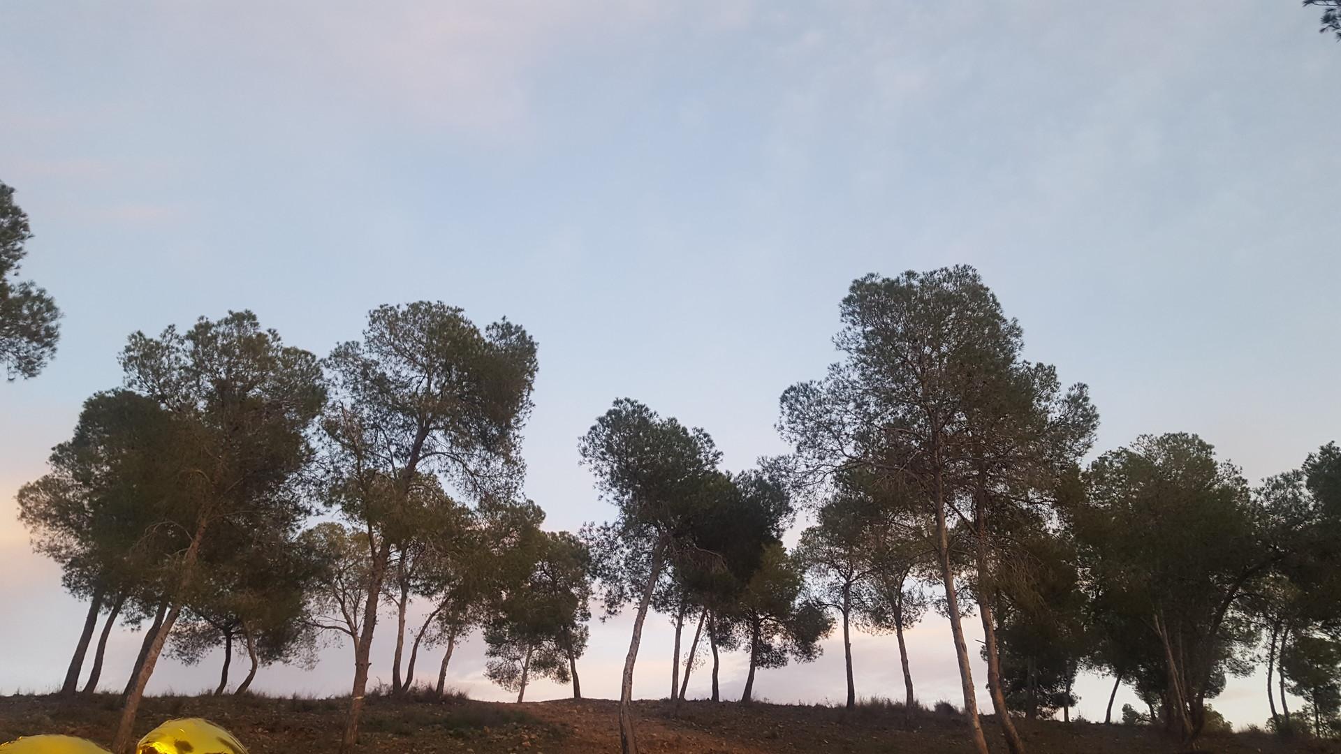 Barbecue all'aria aperta a Murcia