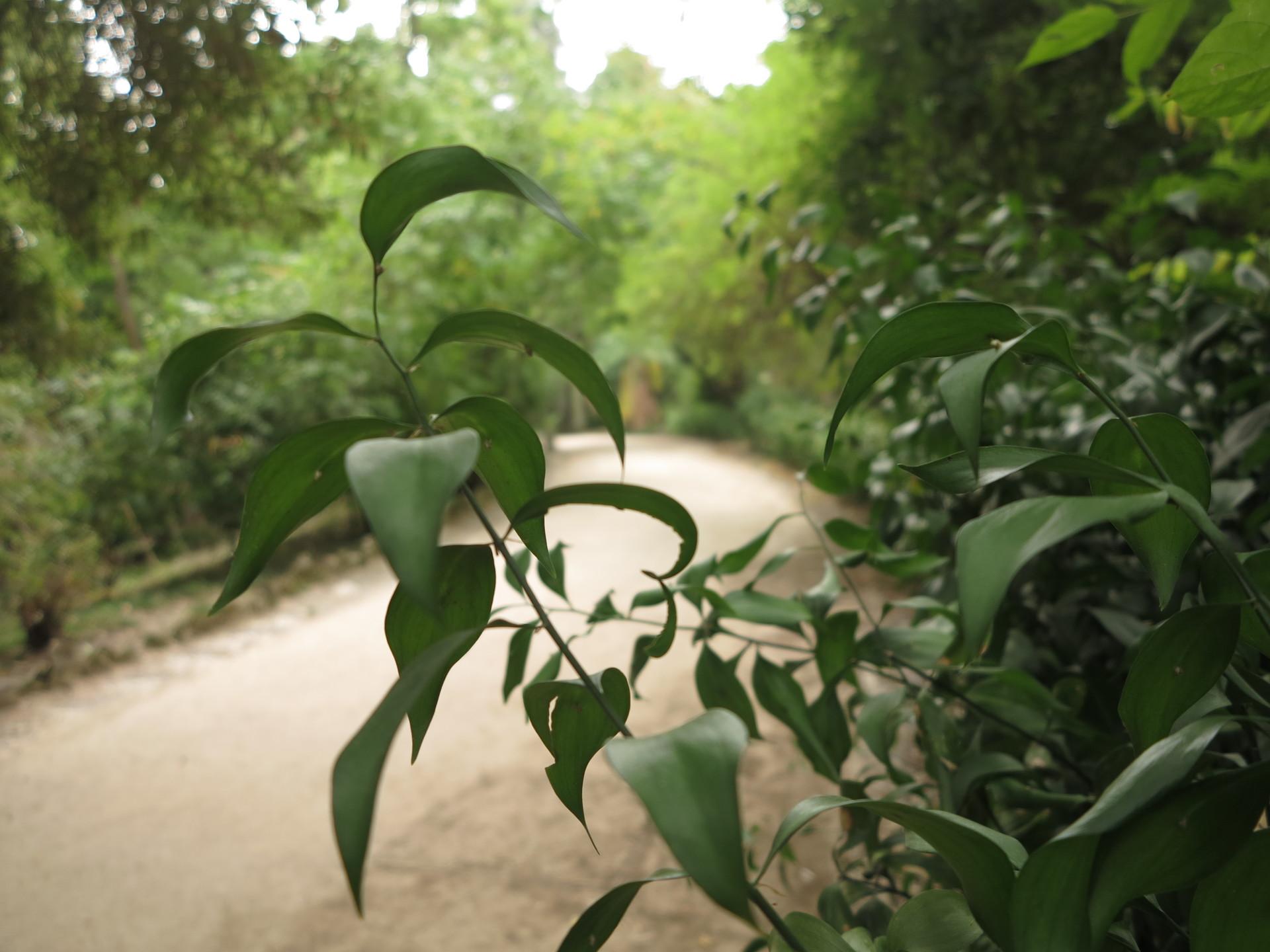 botanical-garden-national-museum-history