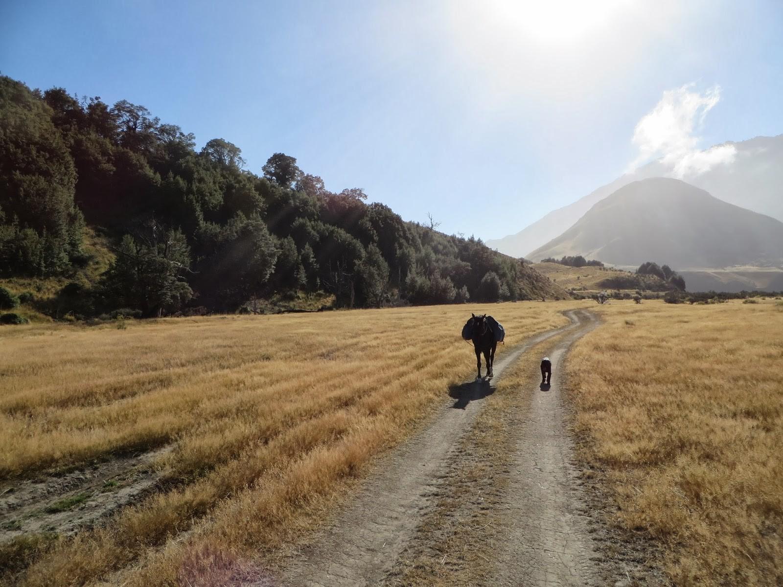 Canterbury and Marlborough - Amazing landscapes and horse trek