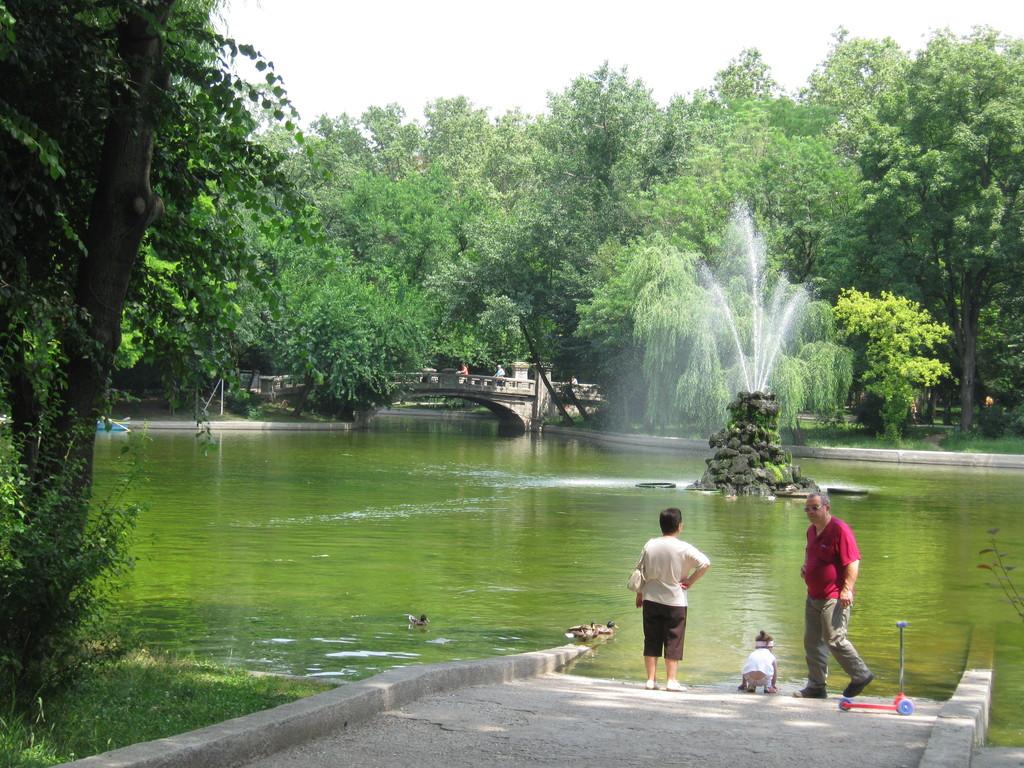 Dziewicza natura w centrum stolicy Rumunii