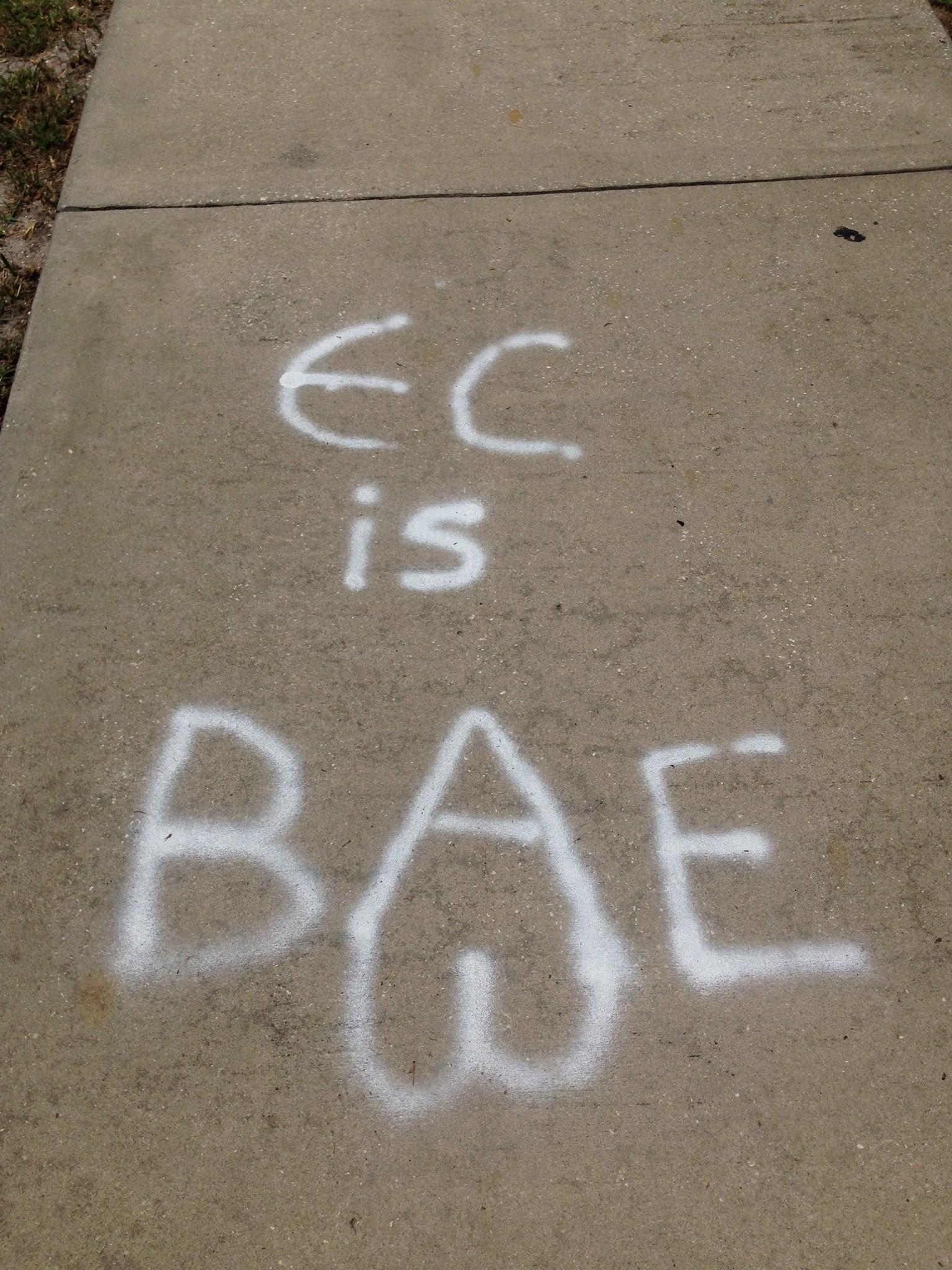 eckerd-college-more-just-university-educ