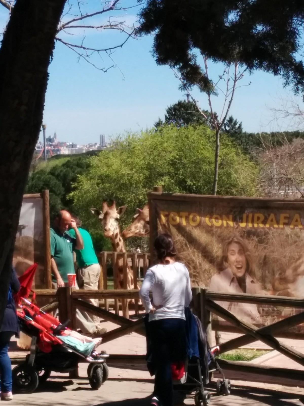 el-zoo-madrid-0f736cb8a901a07fd59e5d006d