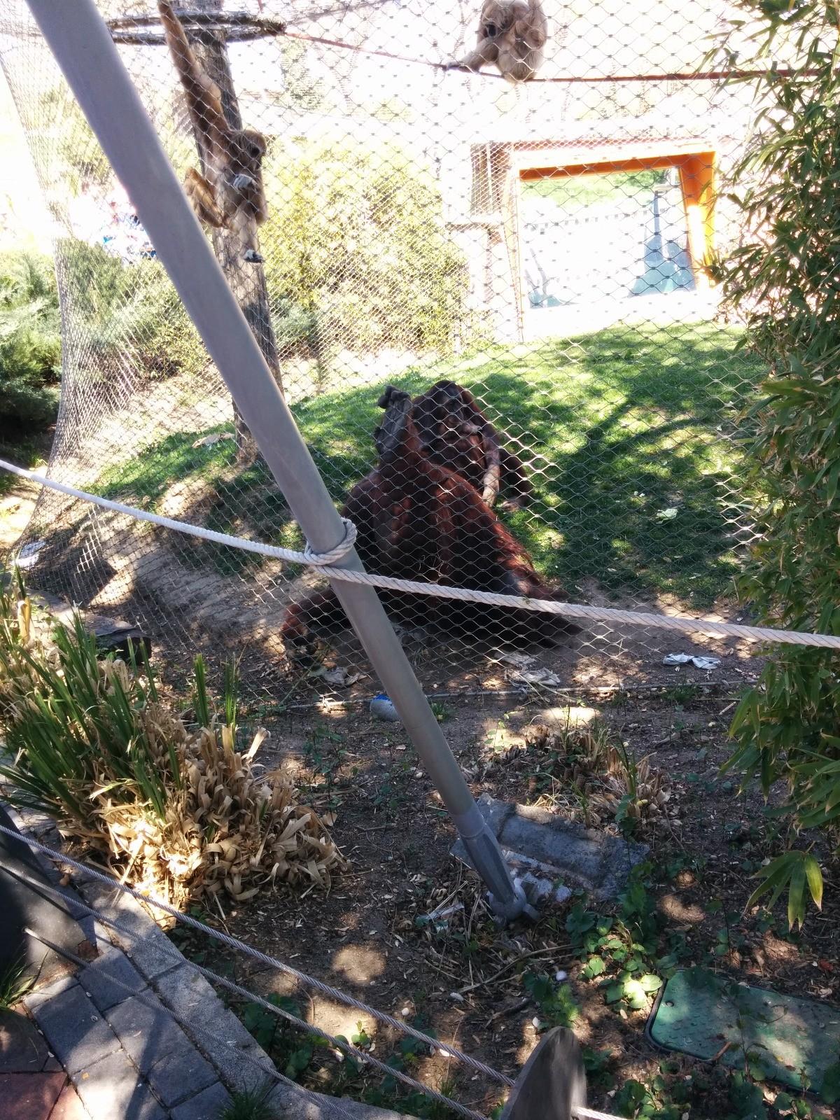 el-zoo-madrid-4c87fd2cfead569878a175cee0