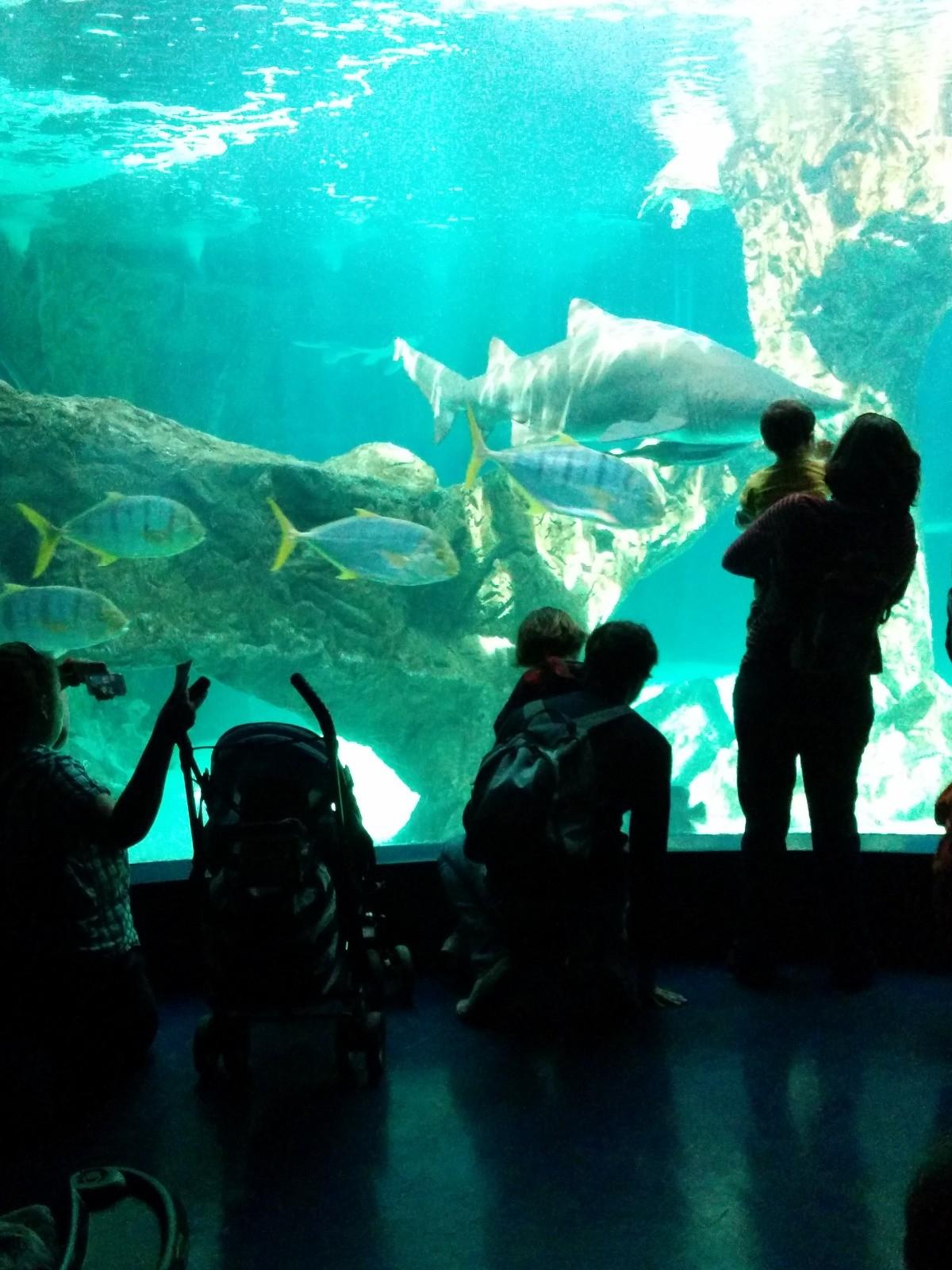 el-zoo-madrid-637d1b164ea92e1ea4170ab609