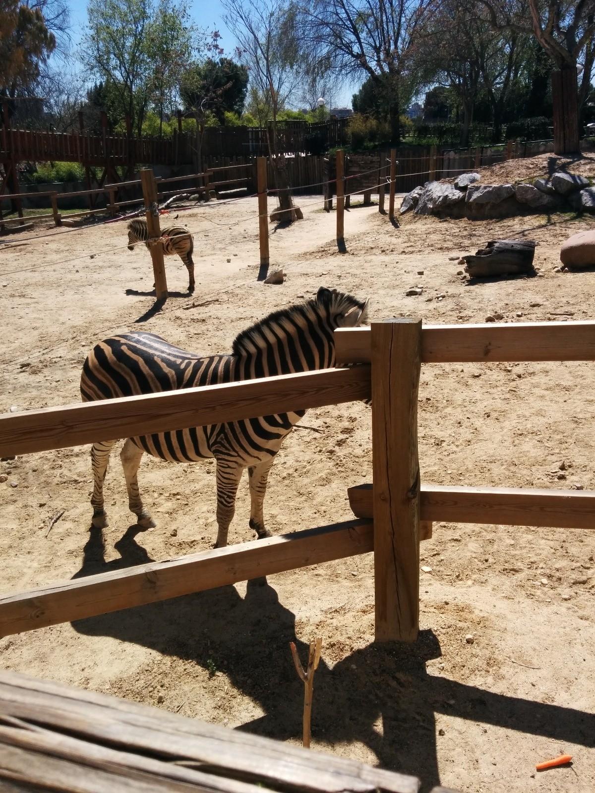 el-zoo-madrid-900c5d4f34afc6413b043b3770