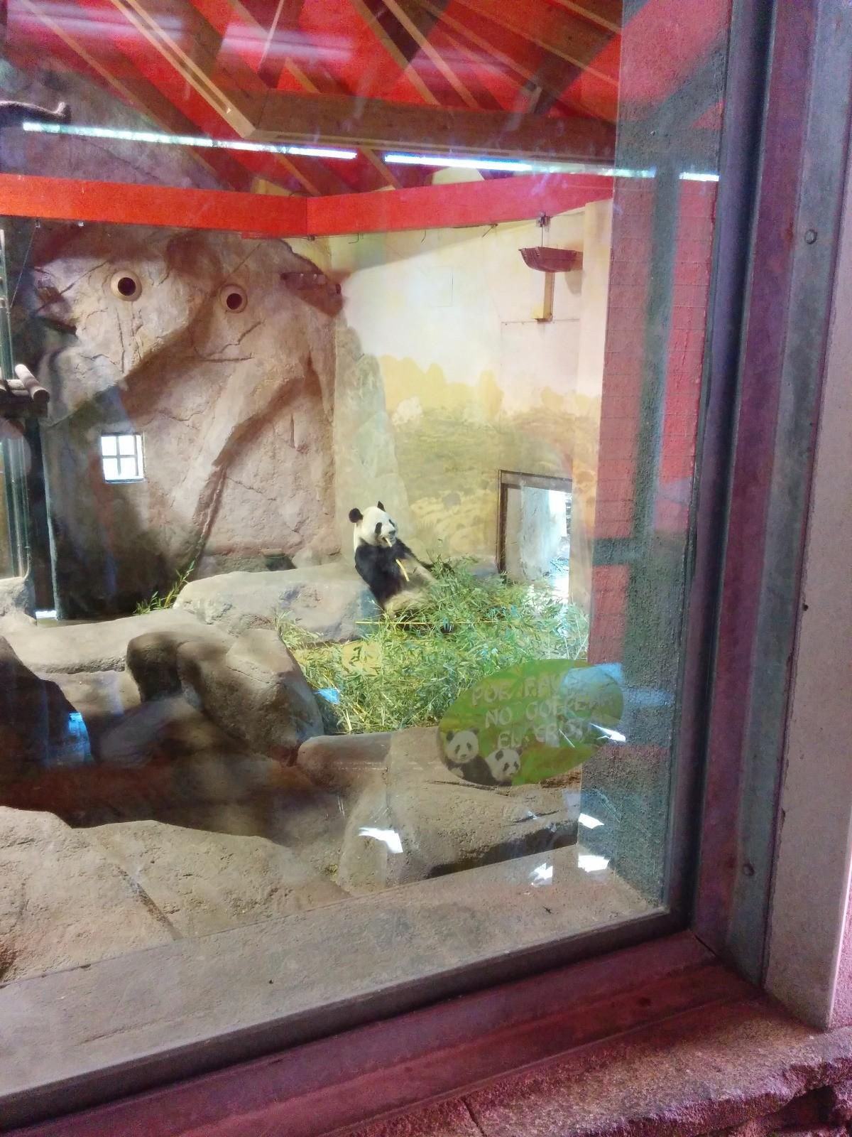 el-zoo-madrid-9326f8a01b8b2cc5704ed67ee3