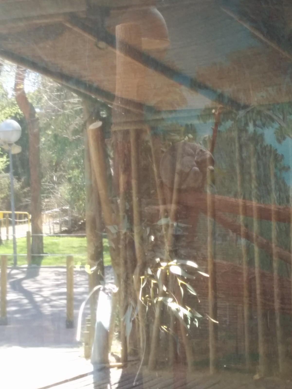 el-zoo-madrid-daa2aa3808046355c117ca965d