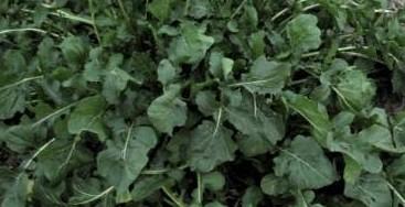 ensalada-quinoa-mango-968e4535945030a84e