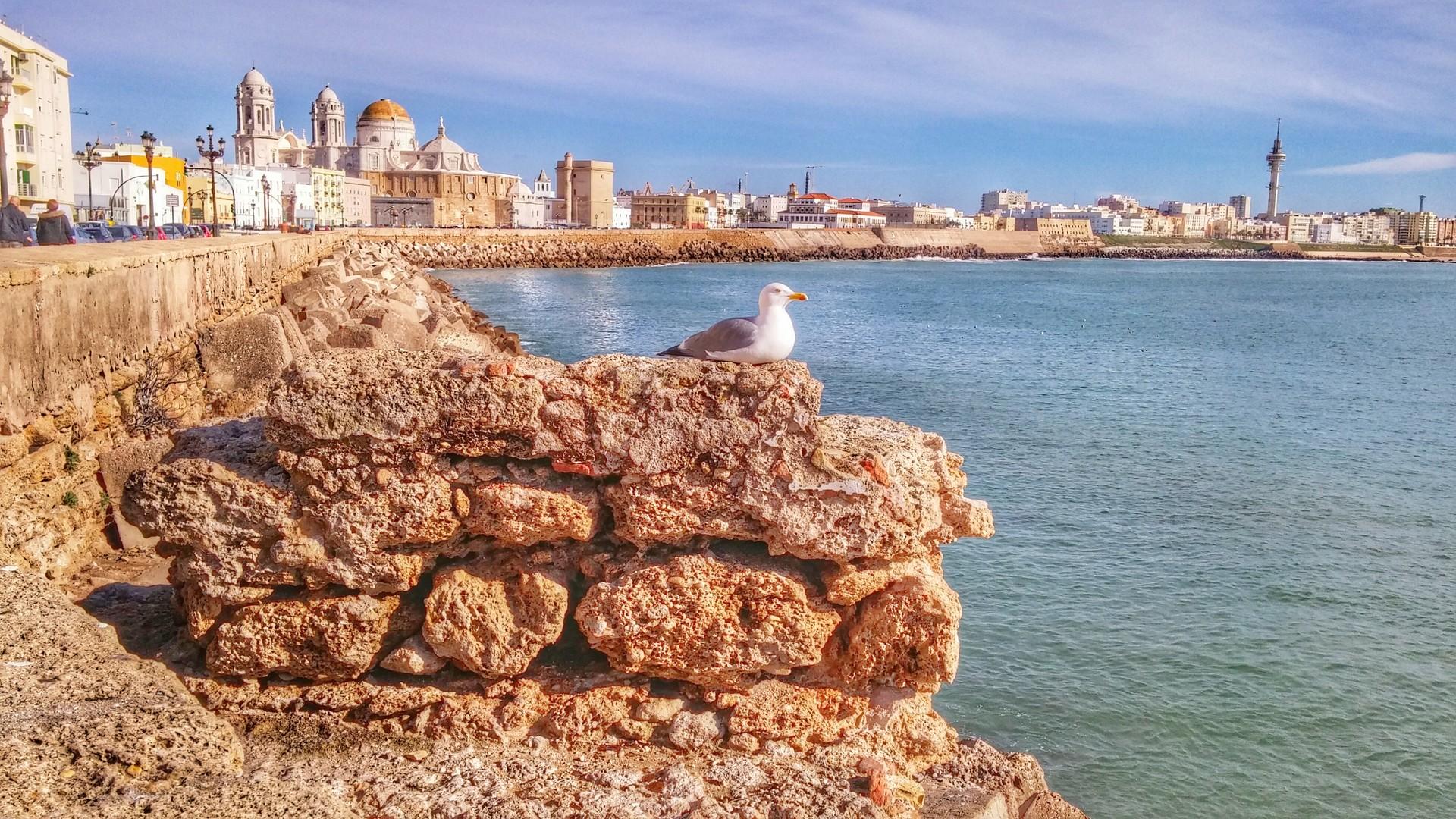 Esperienza Erasmus a Cadice, Spagna di Alison