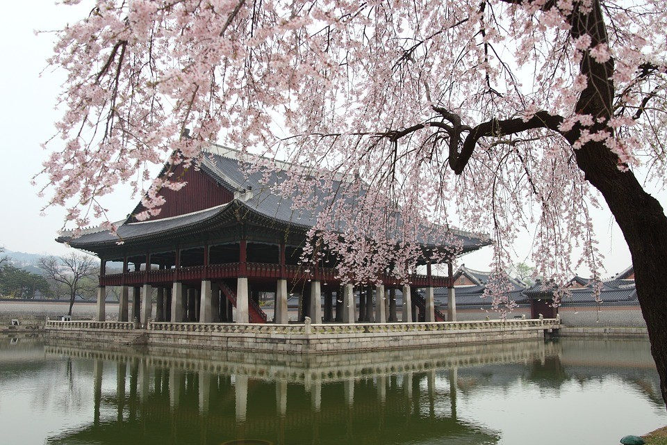 Experience in Seoul, Korea South by Anes | Erasmus