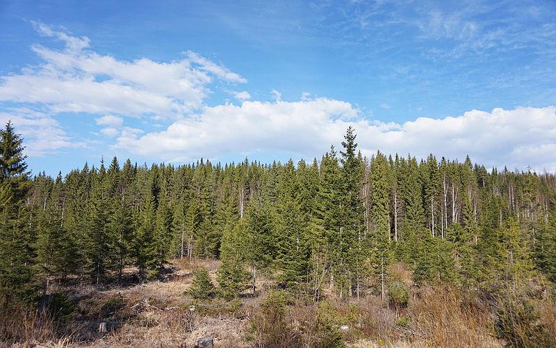 Experiencia en Jyväskylä, Finlandia, por Aurélien