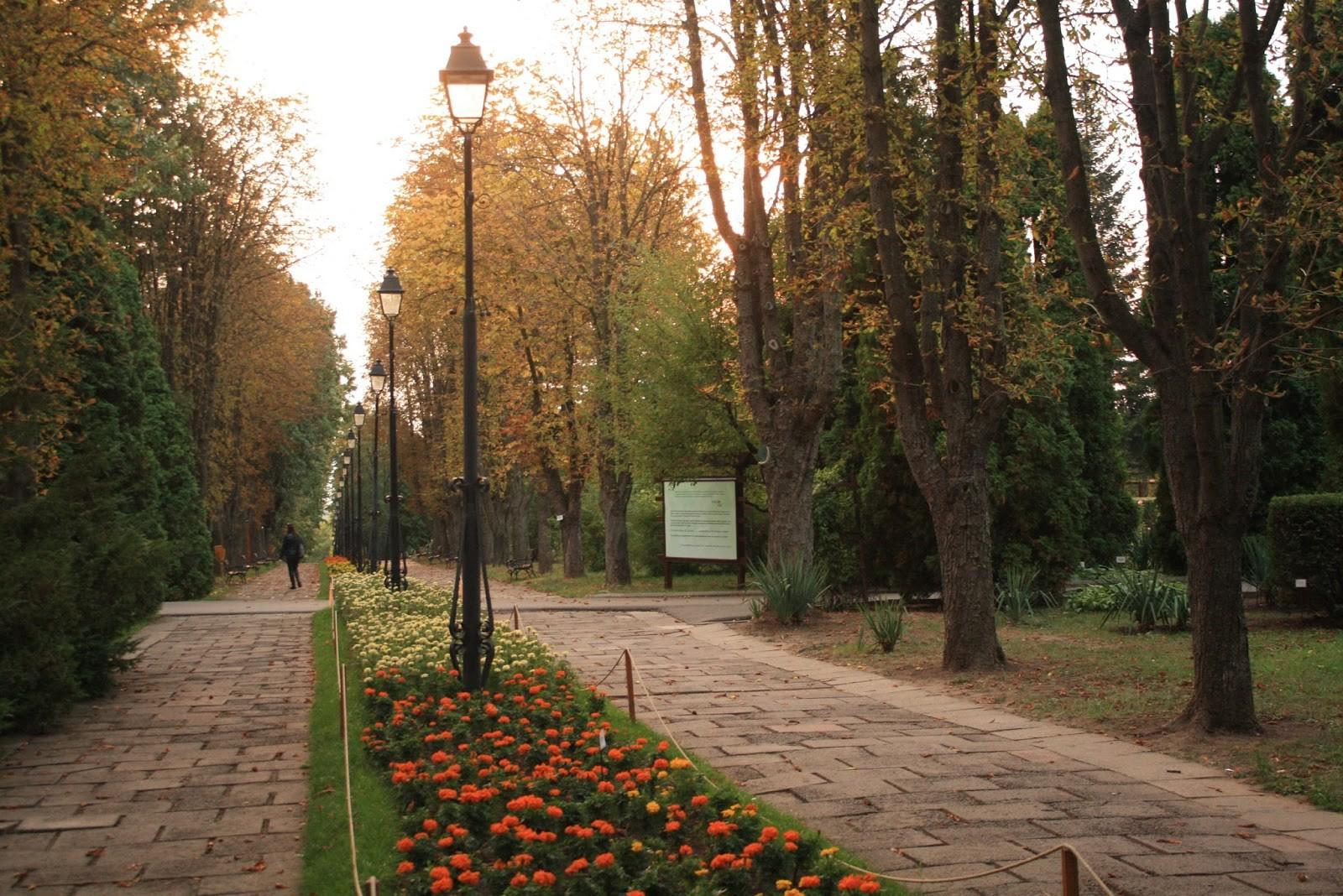 Experiencia Erasmus en Iași, Rumanía por Darie Viorica