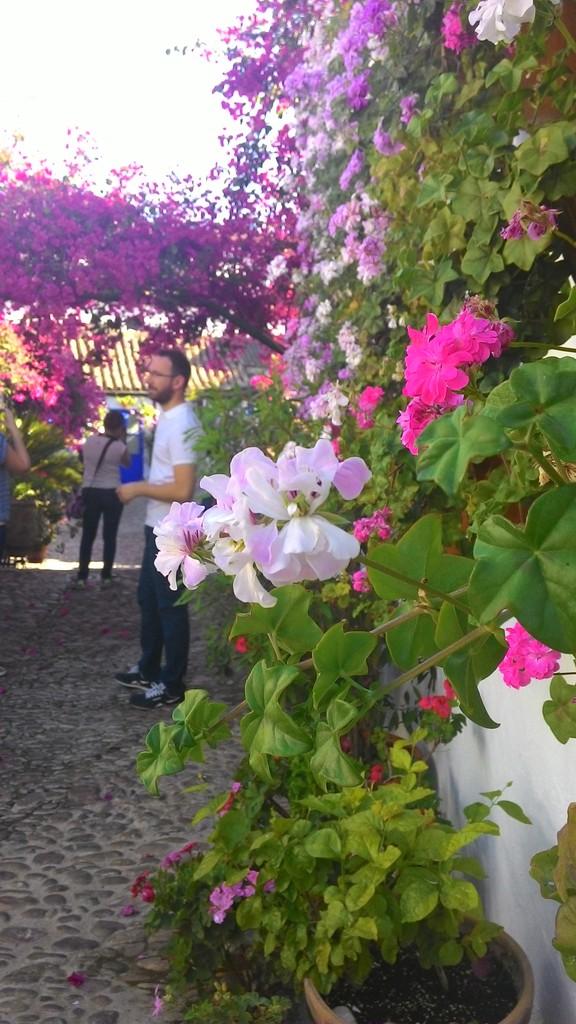 Fiesta de los patios - toda la ciudad florece