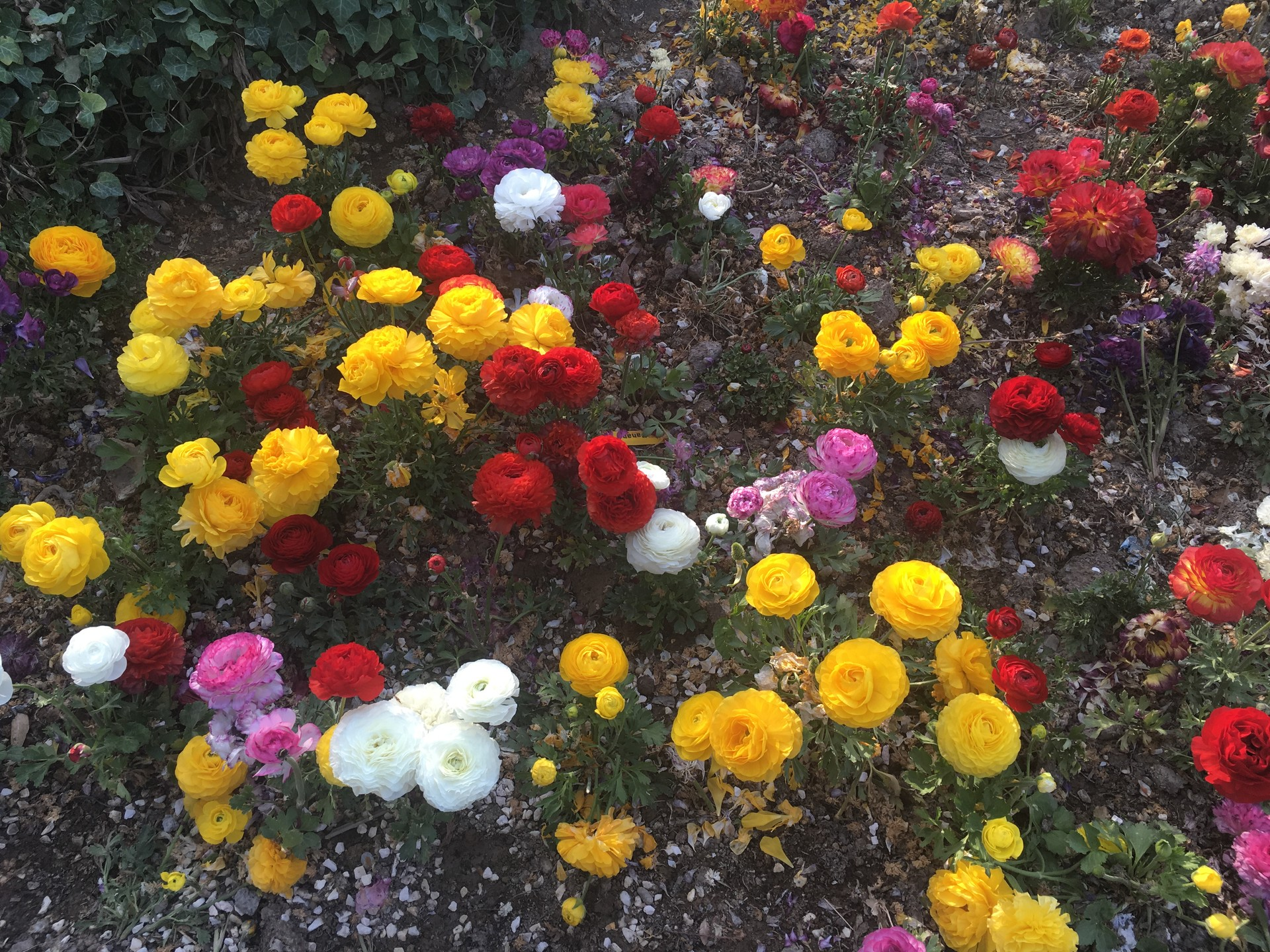 flower-garden-isfahan-2f3ded726070c9f330