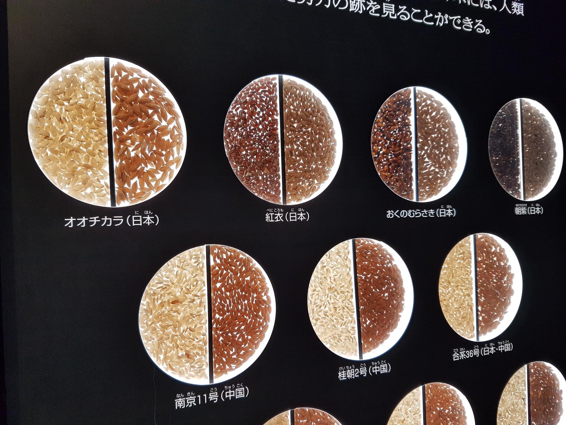 geeking-tokyo-national-museum-science-85