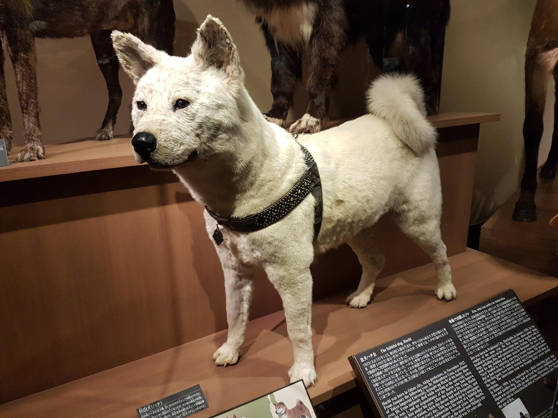 geeking-tokyo-national-museum-science-bc