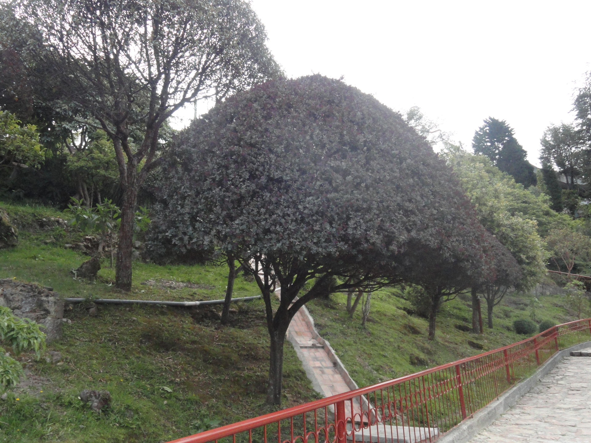 Get the best panoramic view of the city from Monserrate Mountain, Bogotá