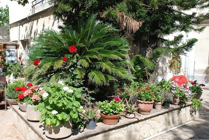 Habitaci n doble con ba o privado en casa grande con for Casas con jardin grande